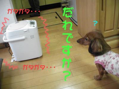 PIC_13822.jpg