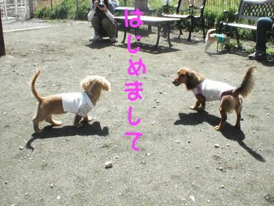 PIC_6076.jpg