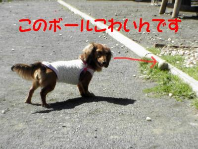PIC_6081.jpg