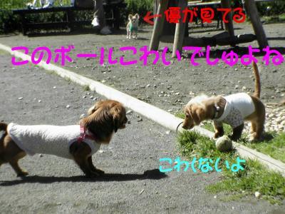 PIC_6082.jpg