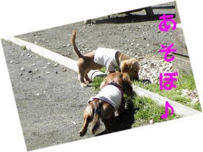 PIC_6083.jpg