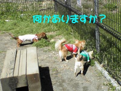 PIC_6089.jpg