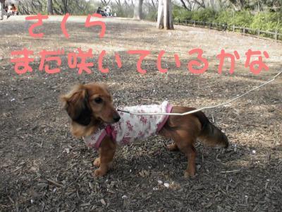 PIC_61552.jpg