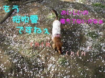 PIC_61562.jpg