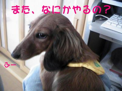 PIC_61732.jpg