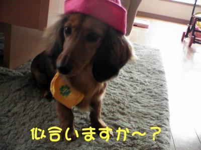 PIC_61772.jpg