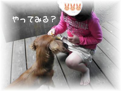 PIC_62062_20080409195357.jpg