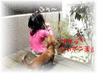 PIC_62092_20080409200512.jpg