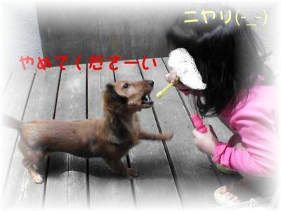 PIC_62132.jpg