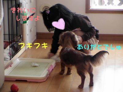PIC_62282_20080429205304.jpg
