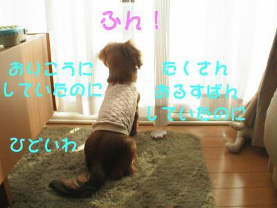 PIC_62452.jpg
