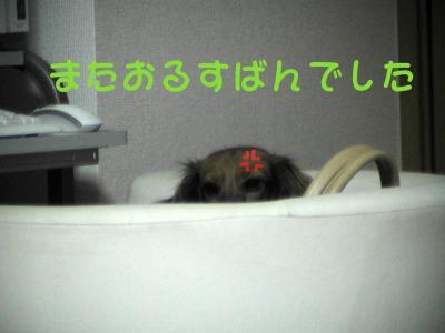 PIC_62492.jpg