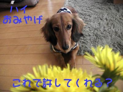 PIC_62692.jpg