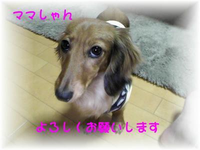PIC_62932.jpg