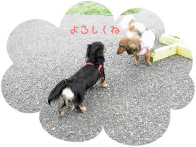 PIC_63152.jpg
