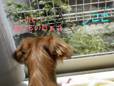 PIC_63842.jpg