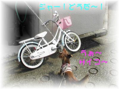 PIC_6423.jpg