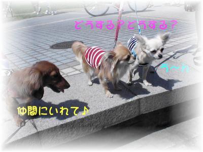 PIC_65182.jpg