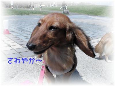 PIC_65342.jpg