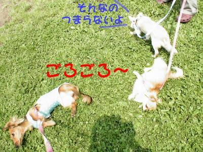 PIC_66542.jpg