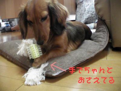 PIC_6788.jpg