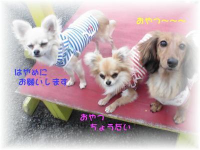 PIC_67942.jpg