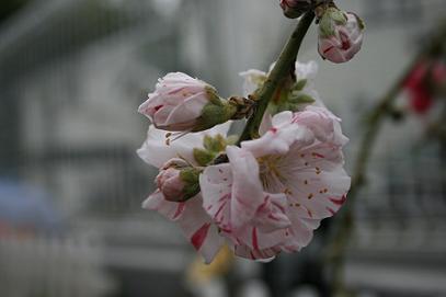 2008/03/30 その1