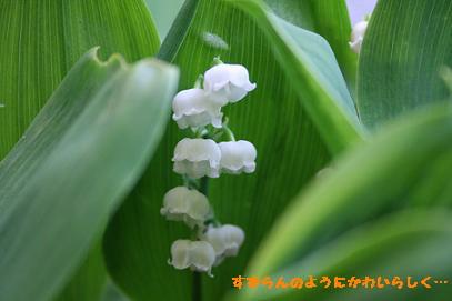 2008/05/01 その1