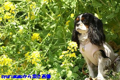 2008/04/06 その7
