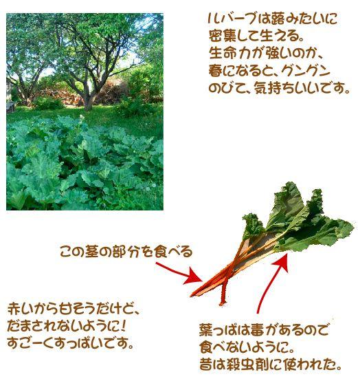 rhubarbpie2.jpg