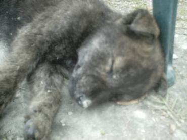 Puppy 002