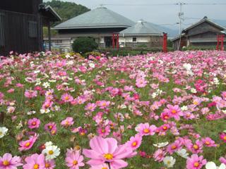 桜ノ宮公園3