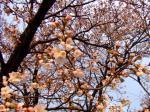 花の接写モードで撮影@ピンボケw