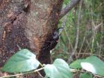 カブト虫1