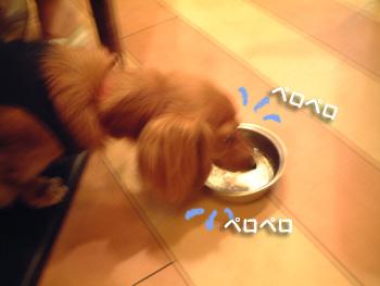 お水の味が違うでちゅ!