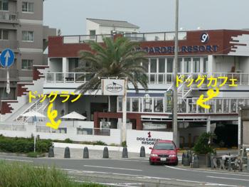 ドッグガーデンリゾート鵠沼