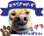 ハピハピコデヲ日記