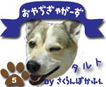 洋菓子店の看板犬
