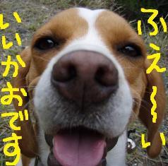 iikao10.jpg