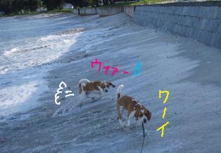 maehama1.jpg