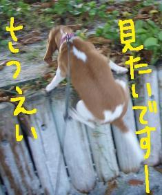 maehama2.jpg