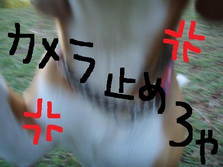 marumi14.jpg