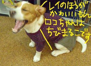 sukato81.jpg