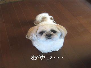 oyayaa_R.jpg
