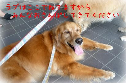 81お散歩9