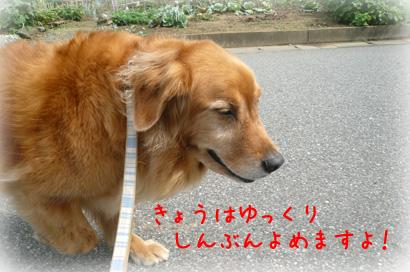 84お散歩1