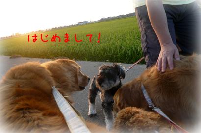 84お散歩13