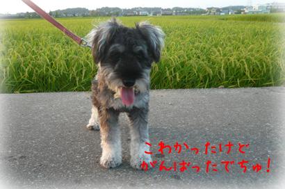 84お散歩18