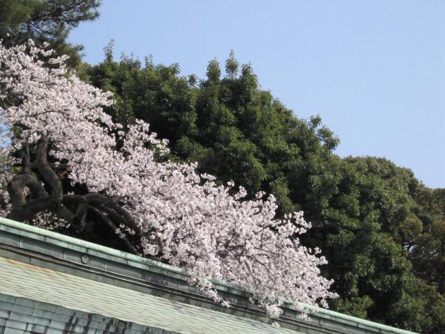 渋谷の花 002