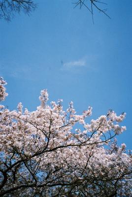 上野公園にて